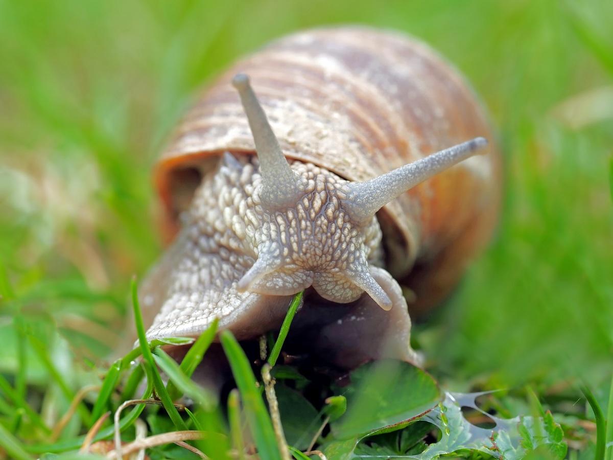 La bave d'escargot recèle bien des mystères