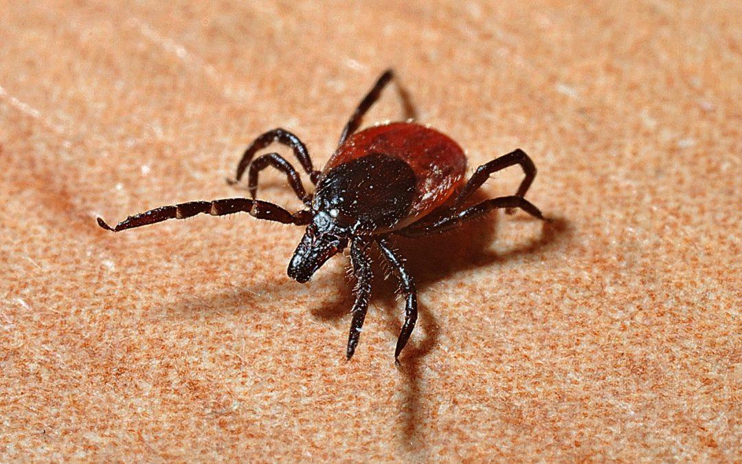 Quel traitement contre la maladie de Lyme efficace et remboursé ?