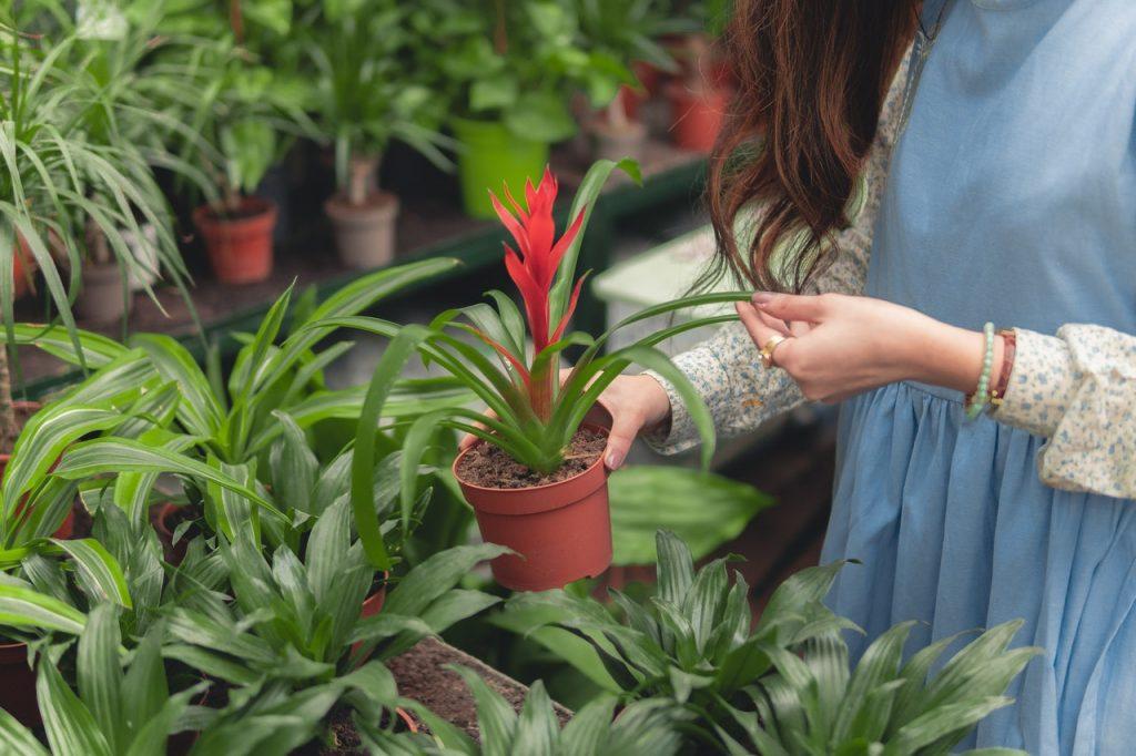 Faire grandir vos plantes