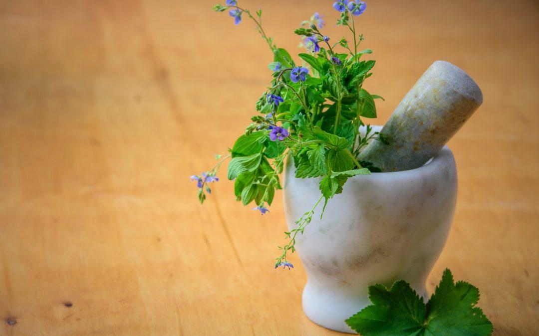Médecine par les plantes : une longue histoire…