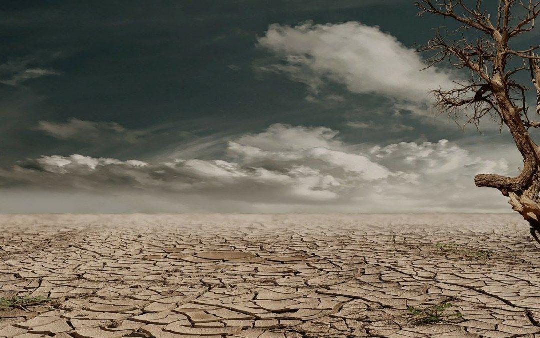 Comment mieux faire face à la sécheresse en été ?