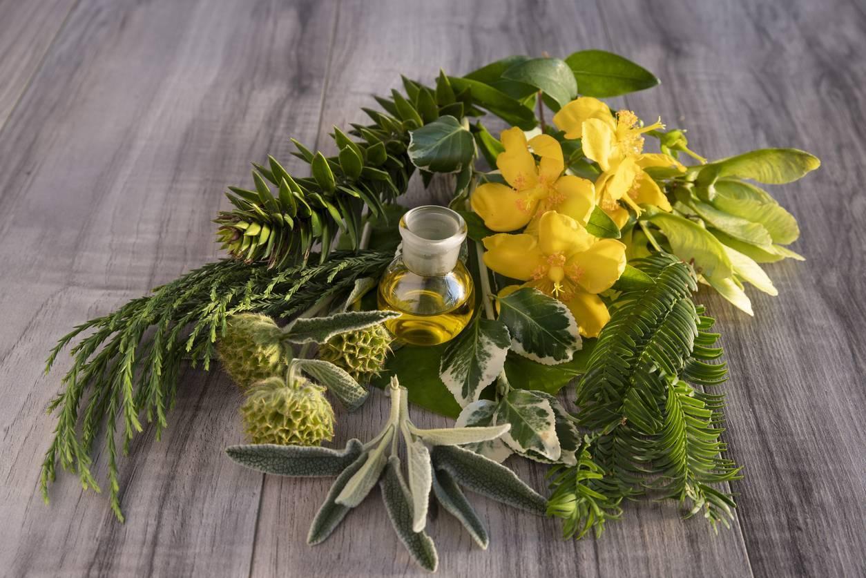 cure naturelle plantes